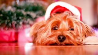 holiday-winter-dog-waiting-21270.jpg