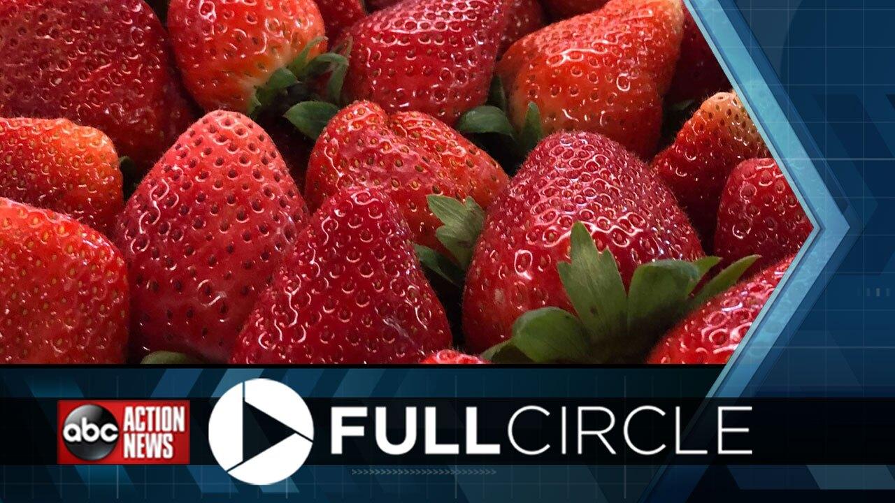 Full-Circle-Strawberry-Festival.jpg