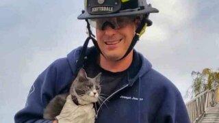 Scottsdale FD rescue cat stuck in tree