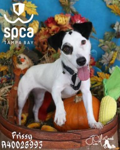PHOTOS: 20+ adoptable pets in the Tampa Bay area for the weekend of November 9