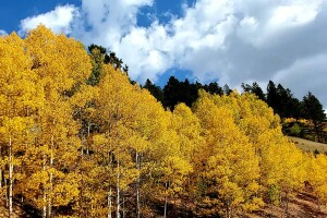 2020 aspens_Road from Divide to Cripple Creek (photo by Katie Steckly)