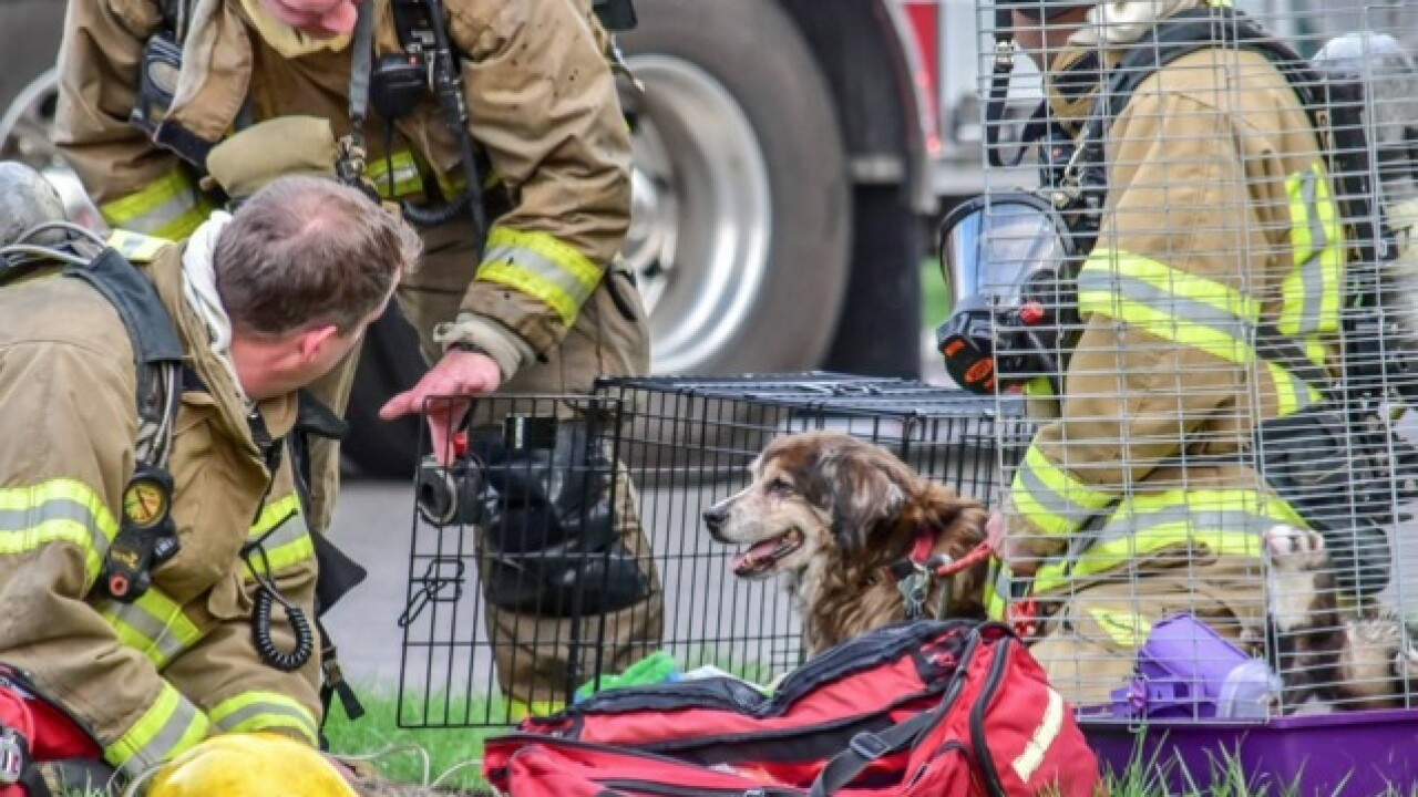 N.F. firefighters rescue animals from house fire