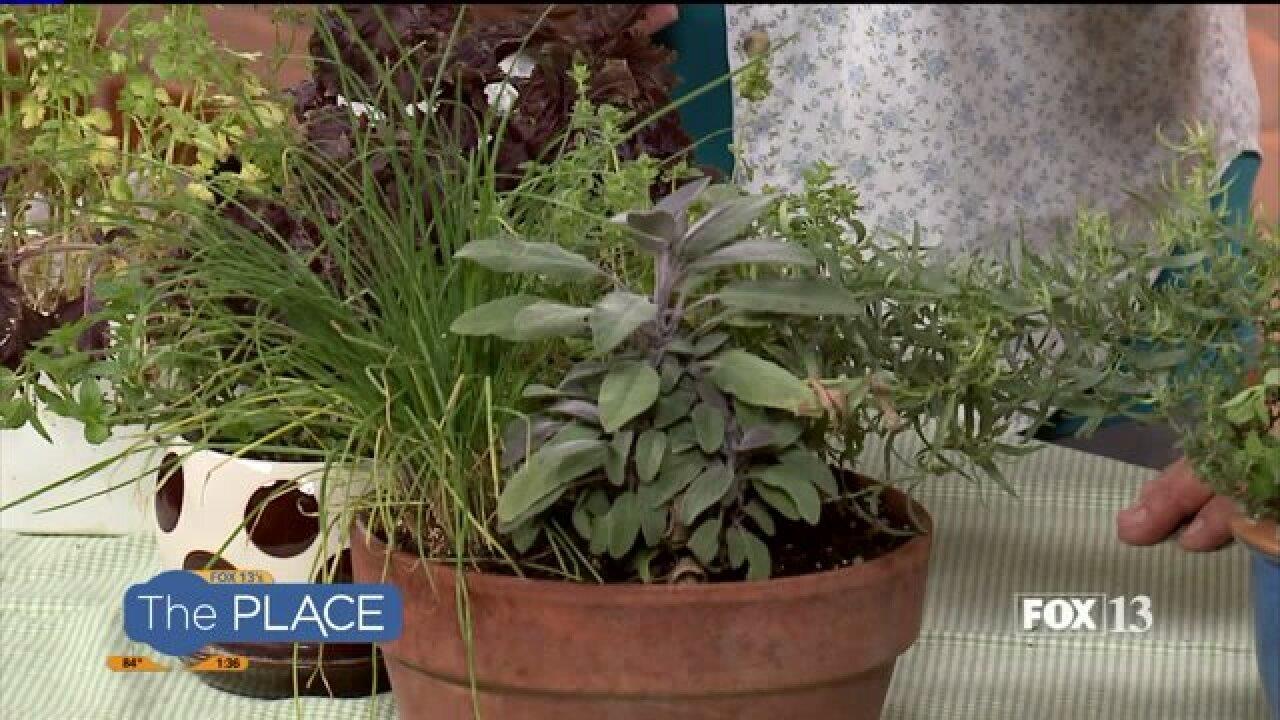 Create your own edible herbgarden