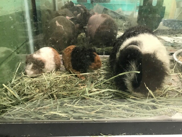 Dozens of animals rescued from Hartford hoarding situation [PHOTOS]
