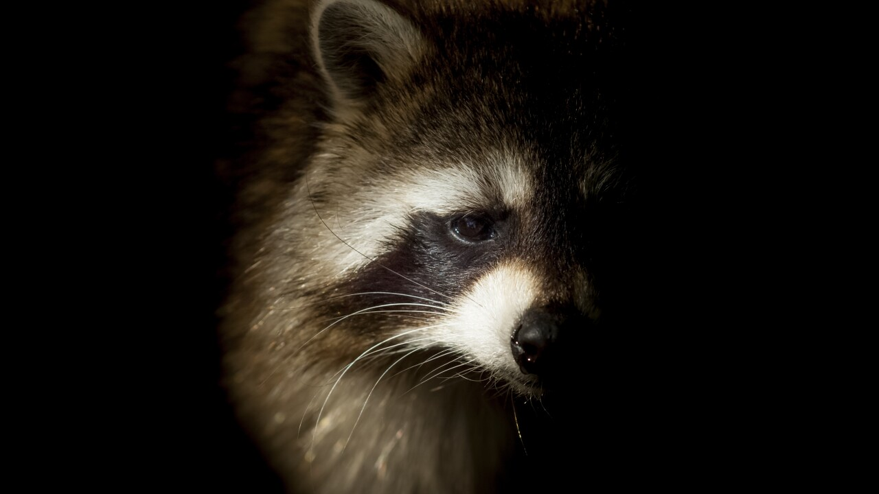 Raccoon tests positive for rabies in York County