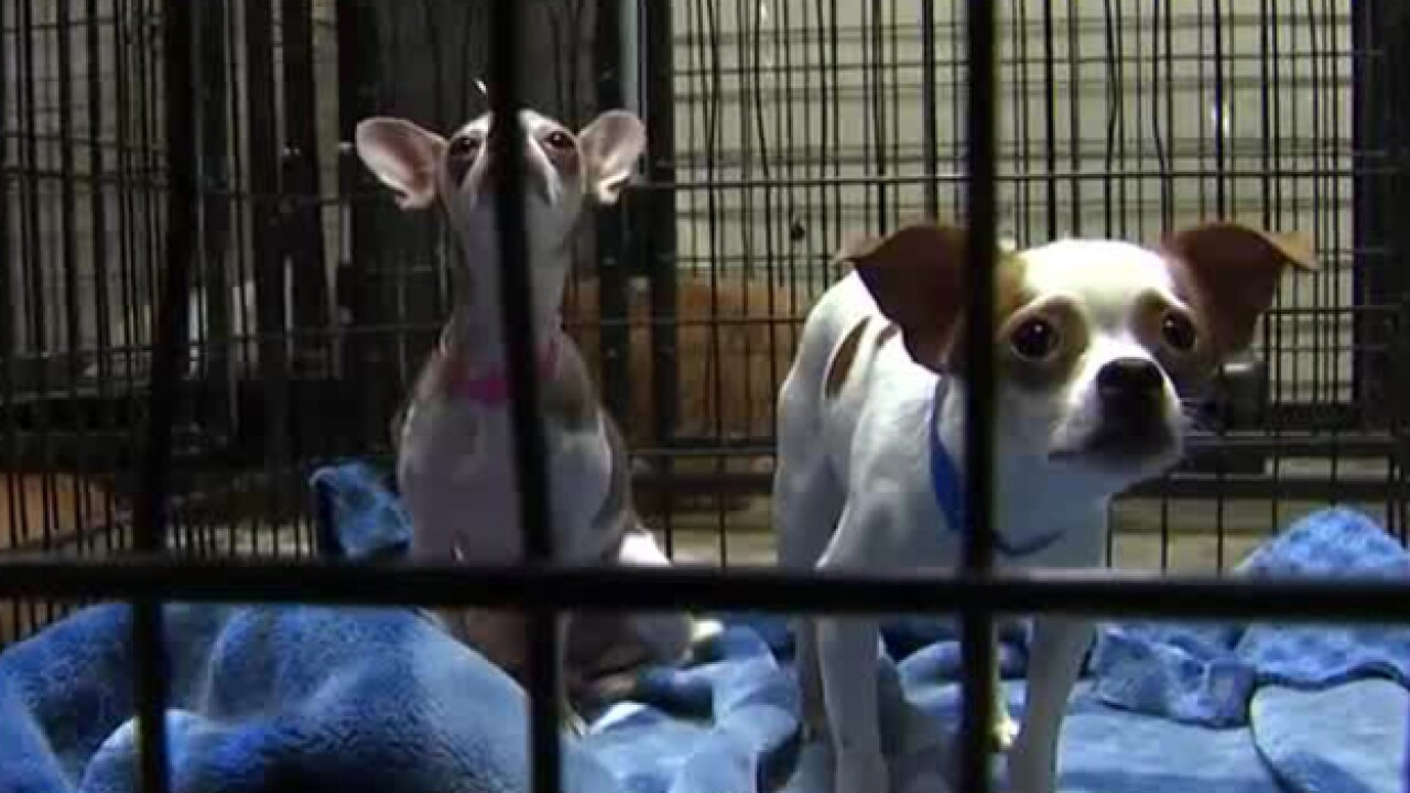 Shelter Animals Evacuated From Hurricane's Projected Path