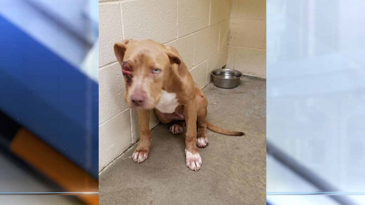 Deputies seek information after dog shot