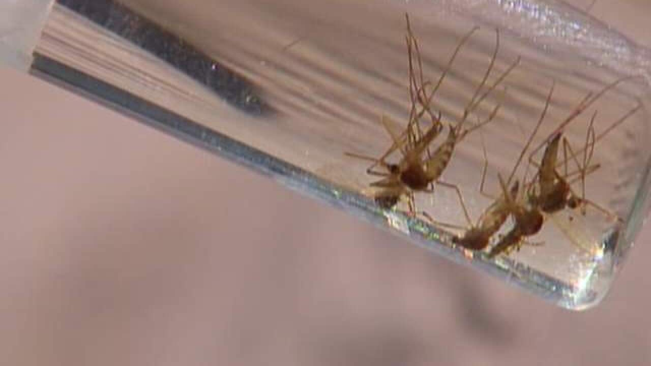 West Nile virus detected in mosquito caught in Lake County