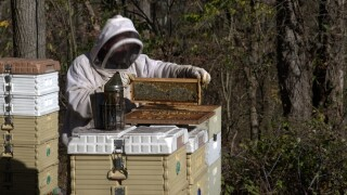 Honeybees helping veterans and first responders cope with stress and PTSD