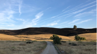 UPDATE: Forward progress stopped in 1,200 acre grass fire in Shandon