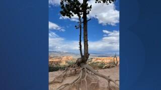 Gnarly trees.jpg