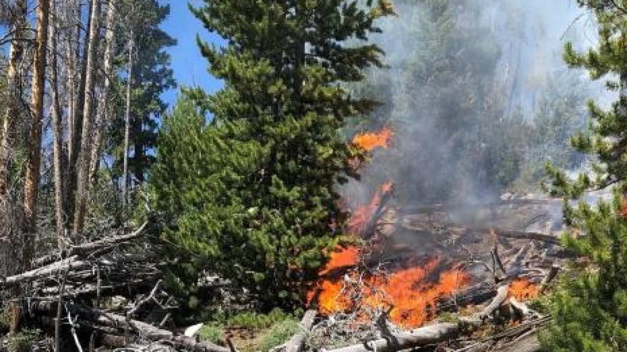 Additional crews called in for wildfire near Whitehall