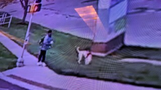 Overland Park Police looking for dog that bit jogger