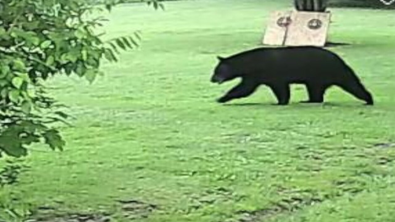 PHOTOS: Black bear spotted in Akron