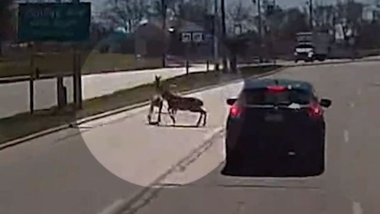 Milwaukee County bus driver seemingly followed by wild animals