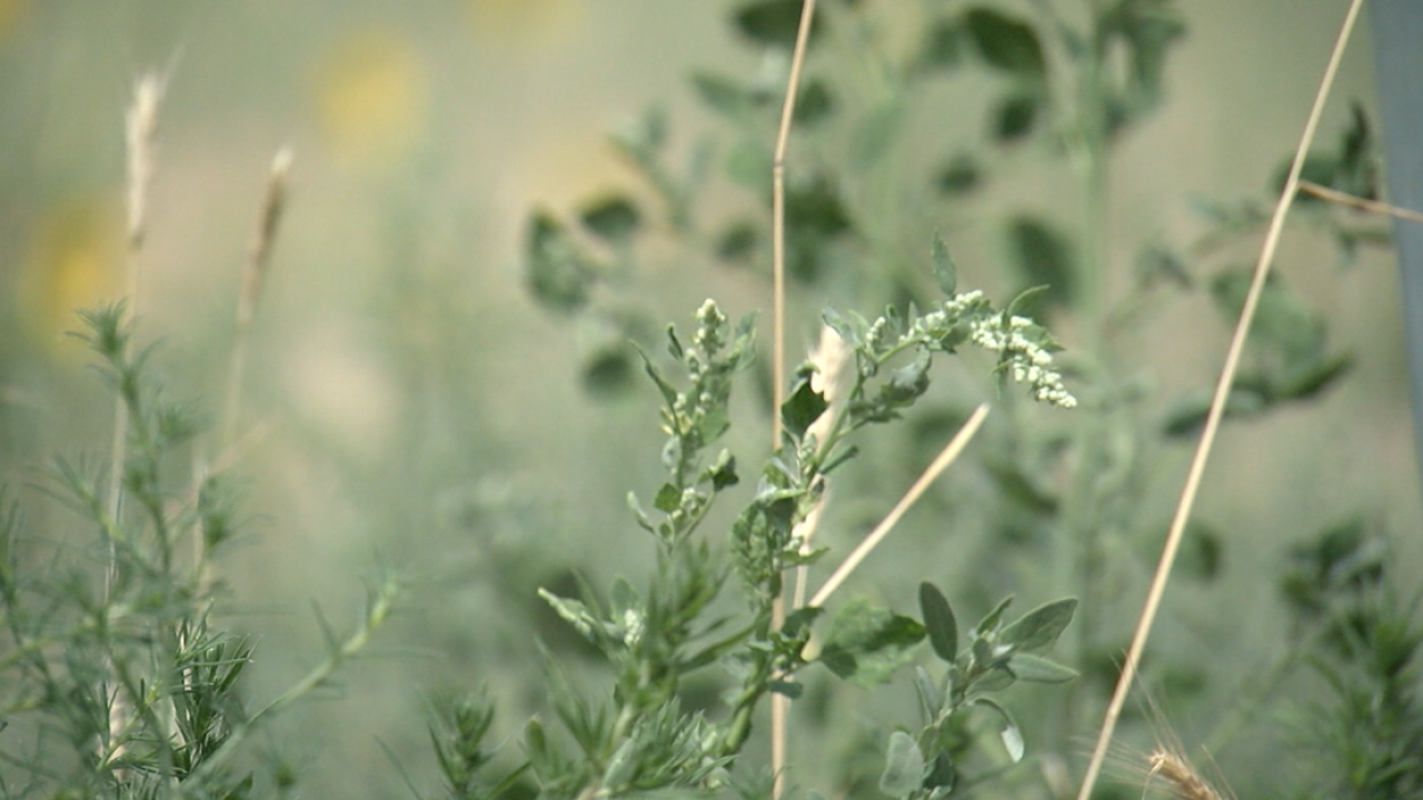 Arapahoe County looking to get to root of weeds problem.png