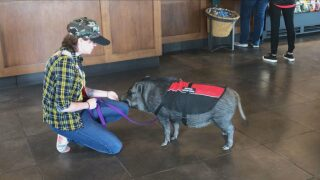 """News 5 Investigates:Airlines and businesses see spike in """"fake"""" service animals"""
