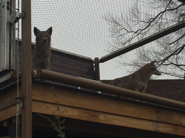 PHOTO GALLERY: Perkins Wildlife Center