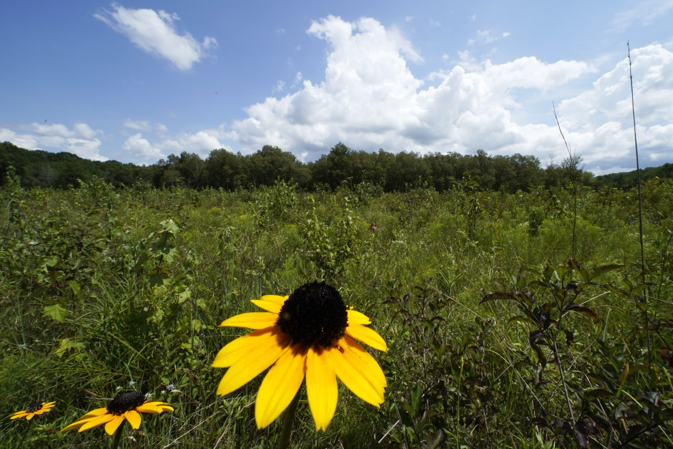 Southern Grasslands Last Stand