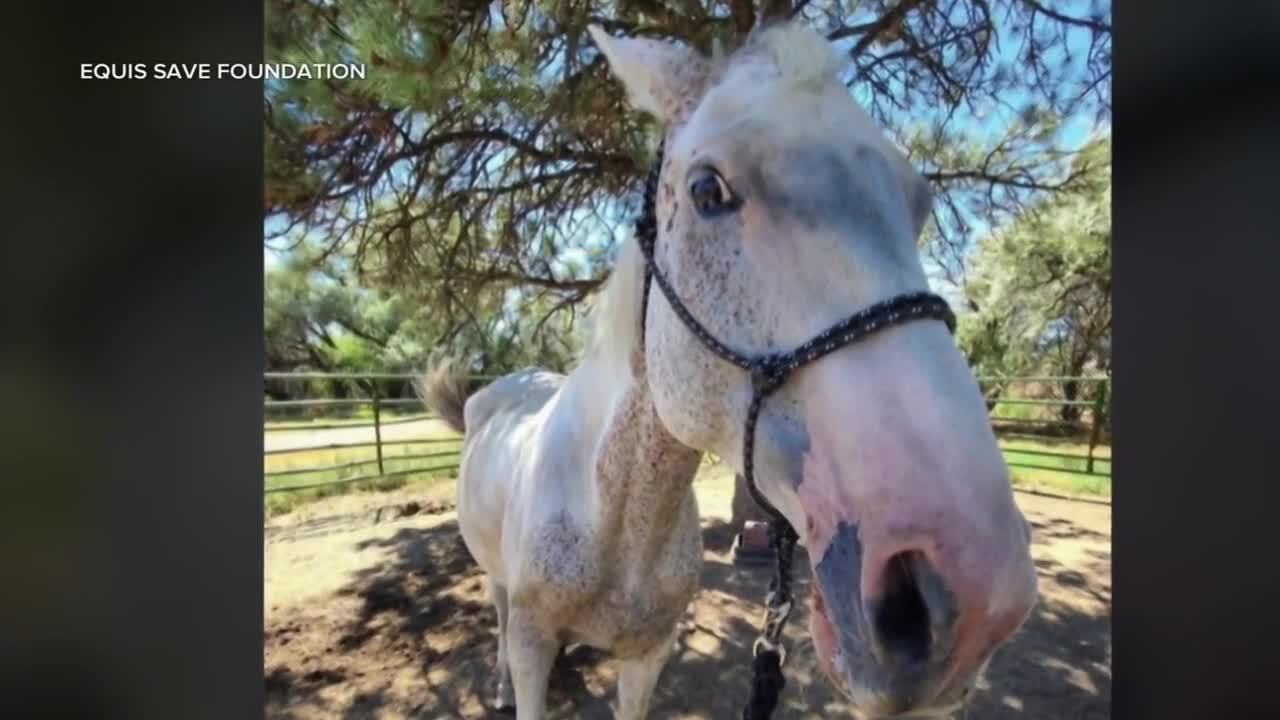 Abused horses saved at auction