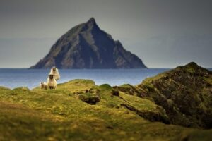 Remote Irish Island Hiring 2 People To Run Coffee Shop And Guest Cottages