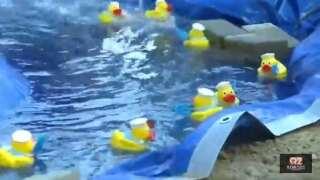 Rubber Duck Regatta raises funds for Yellowstone Wildlife Sanctuary
