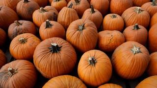 Havana to host 21st PumpkinFest on Saturday