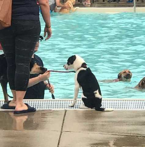 Dogs take over Cool Waters during Doggie Dip 2017