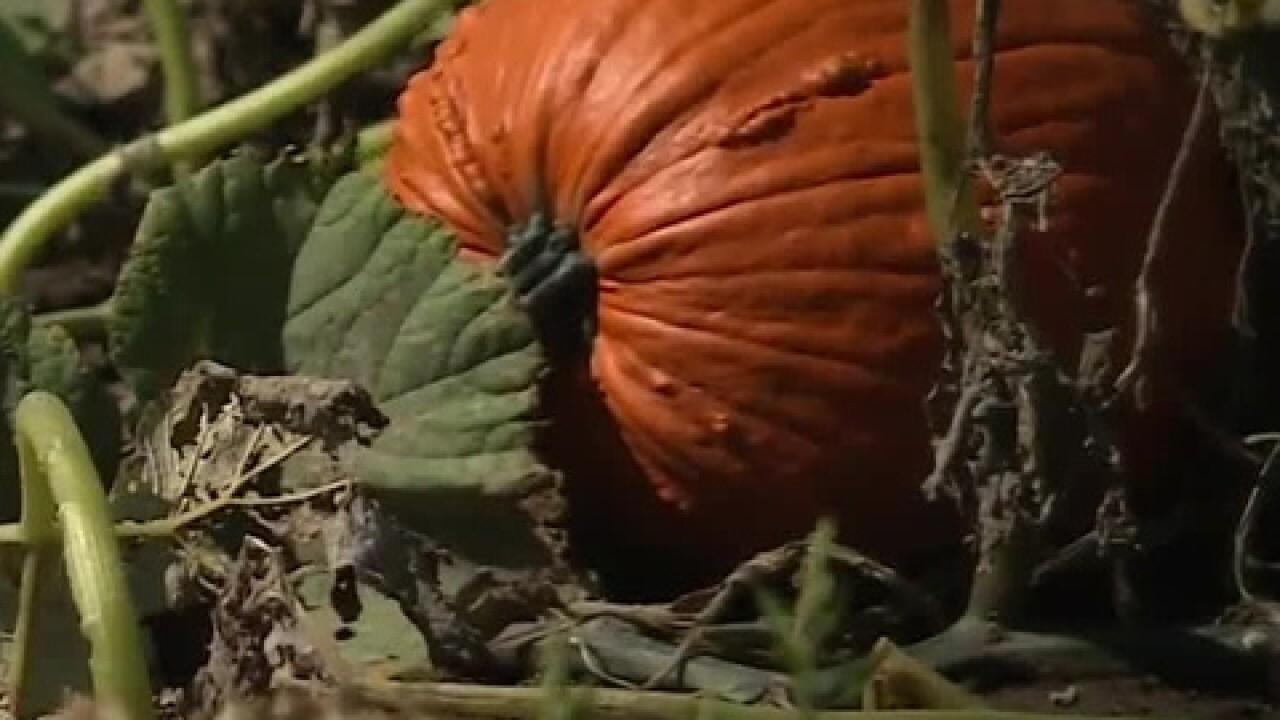 Meuer Farm celebrates 10 years of fall fun