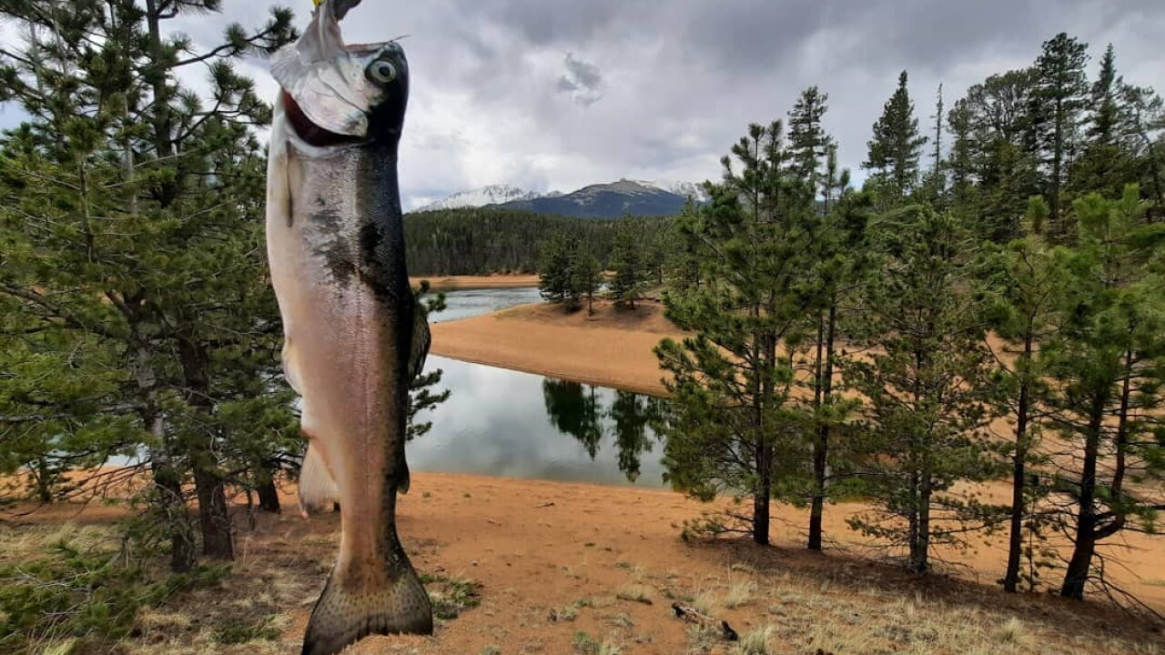 A rainbow trout caught at the South Catamount Reservoir, Fishing, Fish