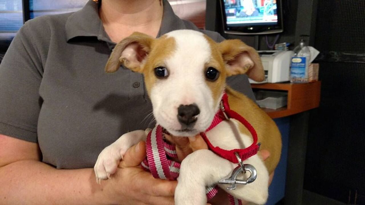 Our Pet of the Week: Meet Paisley the Puppy