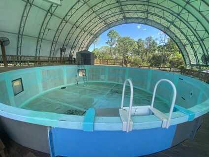 manatee-clearwater marine aquarium (3).jpg