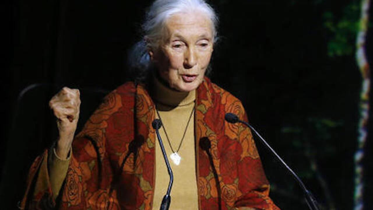 Jane Goodall feels sorry for Ohio zoo director