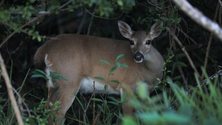 Sheriff: 28-year-old accidentally shot by brother while deer hunting