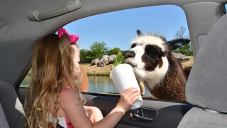 Ohio's African Safari Wildlife Park closes for 2020 season