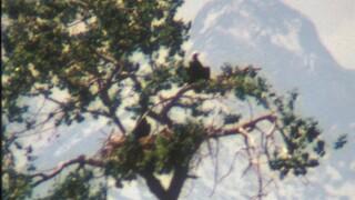 barr lake state park_1989GalenGibson.jpg