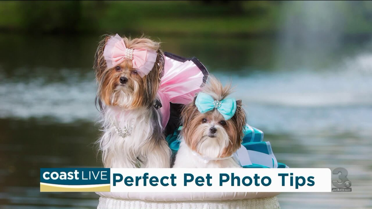 How to take perfect pet pics according to the pros on CoastLive