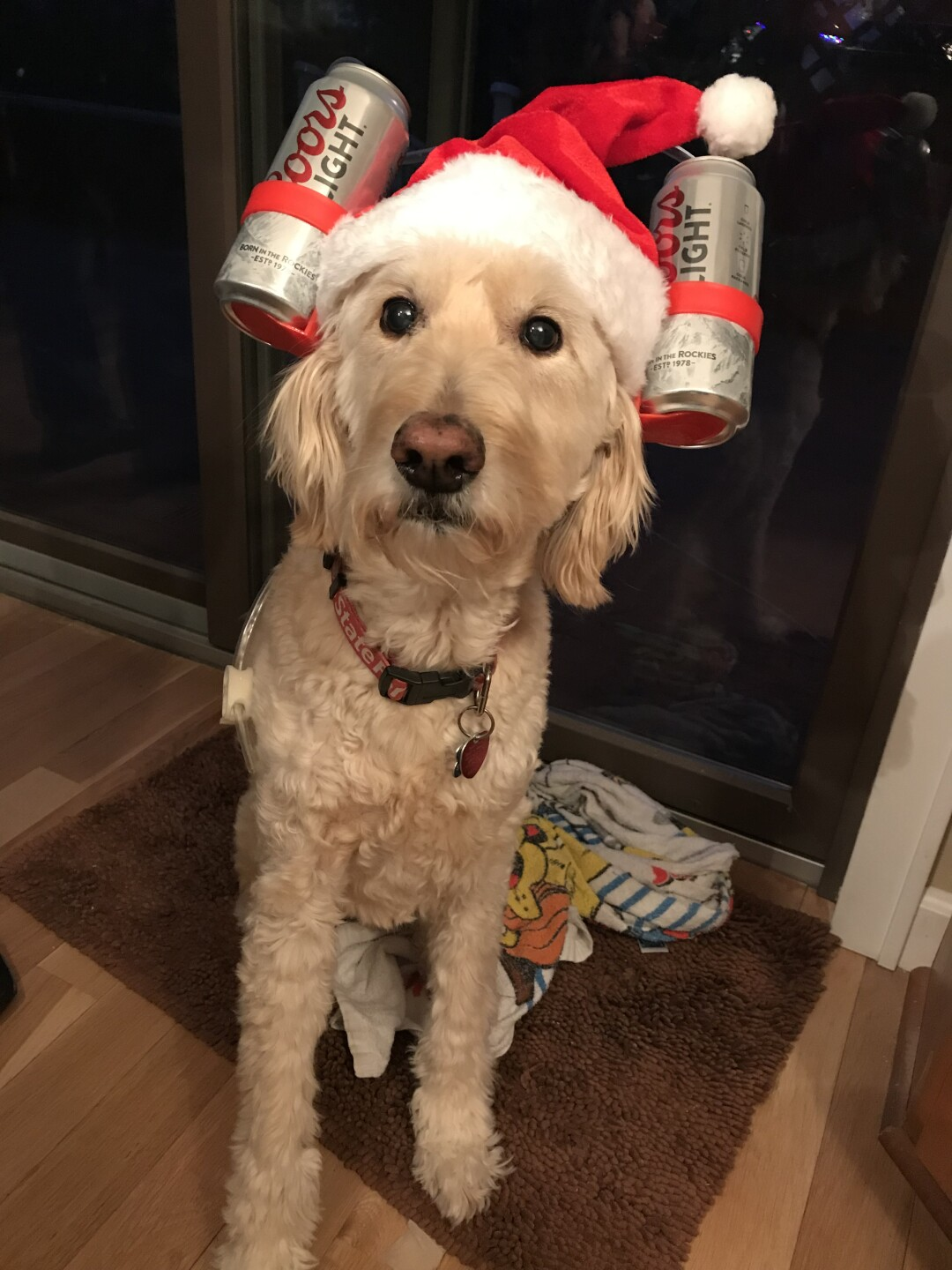 grand dog, Baxter, celebrating the new year sent by Ann Lantzy.JPG