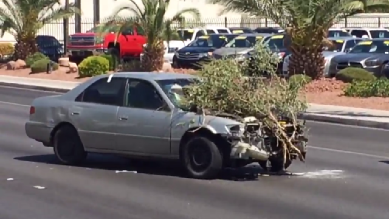 Car takes out trees, light poles in crash