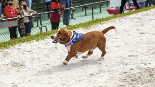 The Mutt Derby Round 2 will take place at Palm Beach Kennel Club on Jan. 30, 2021 beginning at 11:30 a.m.