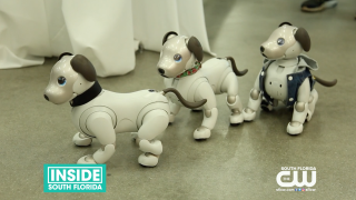 Sony Launches new Robotic Dogs