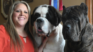 Canton dogs competing in Westminster Kennel Club Dog Show