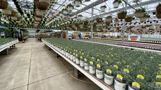 Countryside Greenhouse Allendale Inside During Coronavirus