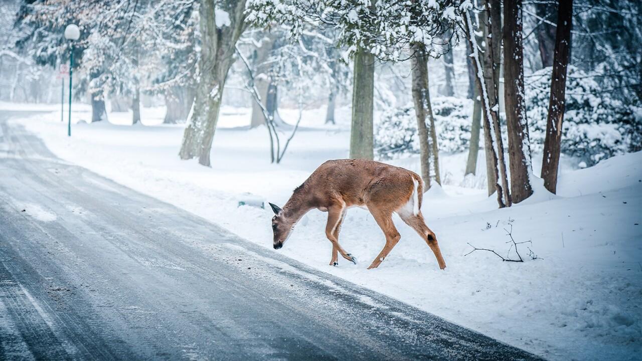 Deer generic.jpg