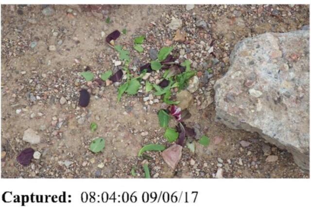Predatory cruelty: Evidence photos and police report details