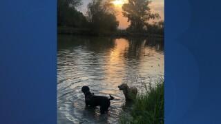 Doggie fun in Cache Valley.jpg