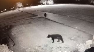 SMPSO reminds citizens to be on the lookout for bears