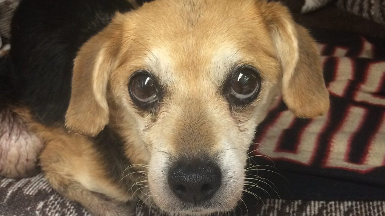Older dog with tumor found in a crate dumped in a Virginia Beachditch