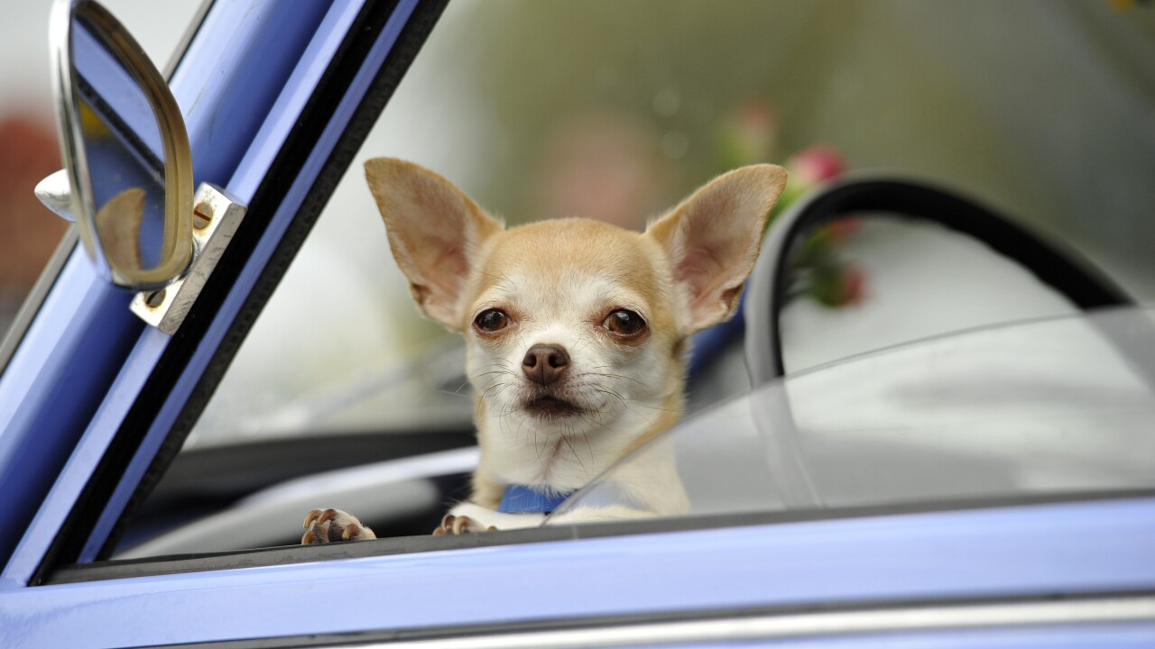 Uber's new feature to let drivers know that passenger will be bringing pets