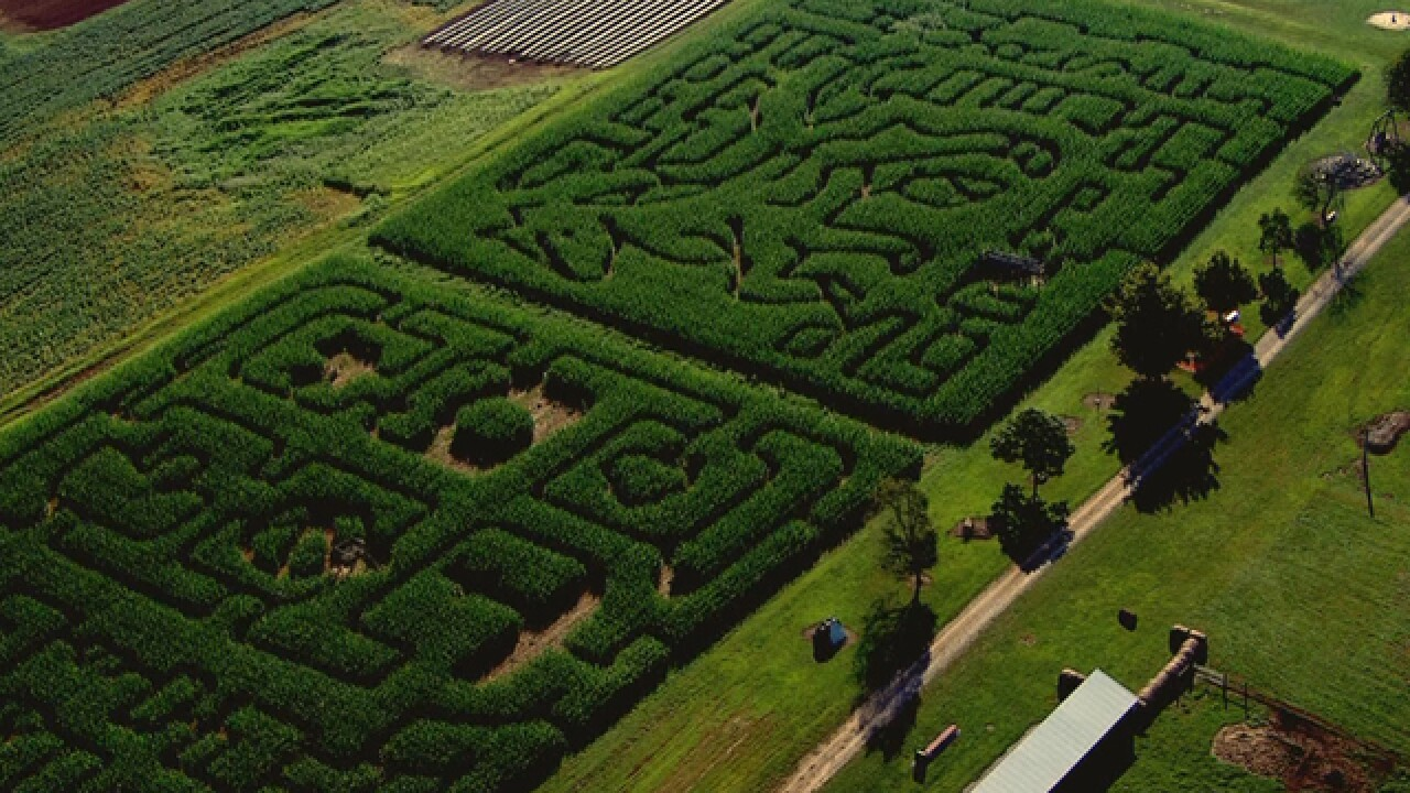 'Amazin Acres' Farm Prepares For Fall Season, Uses Corn Mazes To Supplement Income